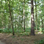 Witley Common